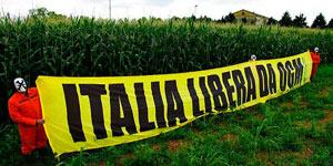 ORG  – L'agricoltura Italiana ha ottenuto una grande vittoria contro gli OGM